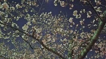 夜桜会2_40.jpg