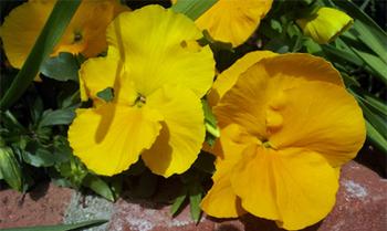 花壇3_50.jpg