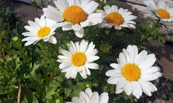 花壇6_50.jpg